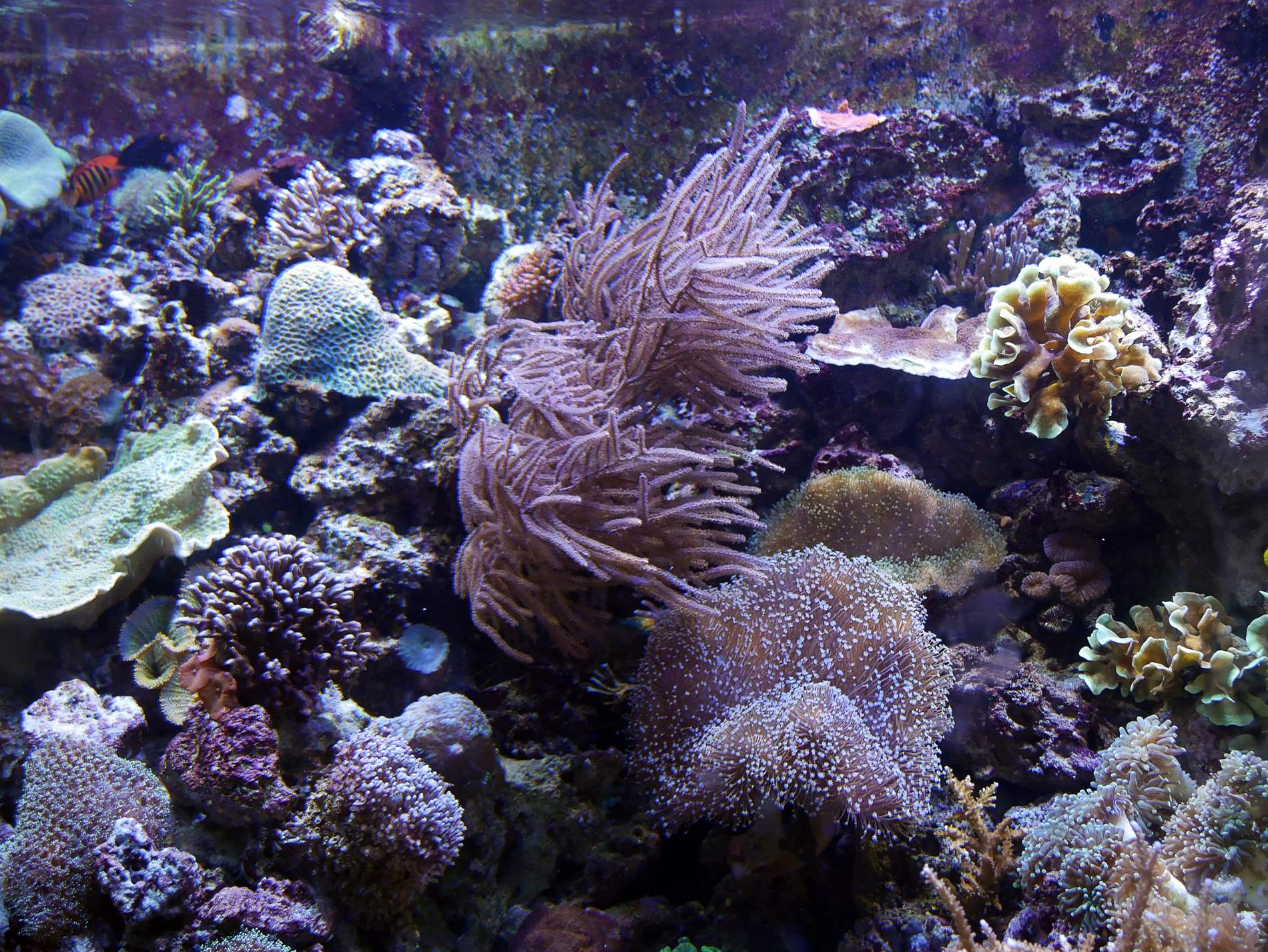 aquarium barcelone - juliesliberties