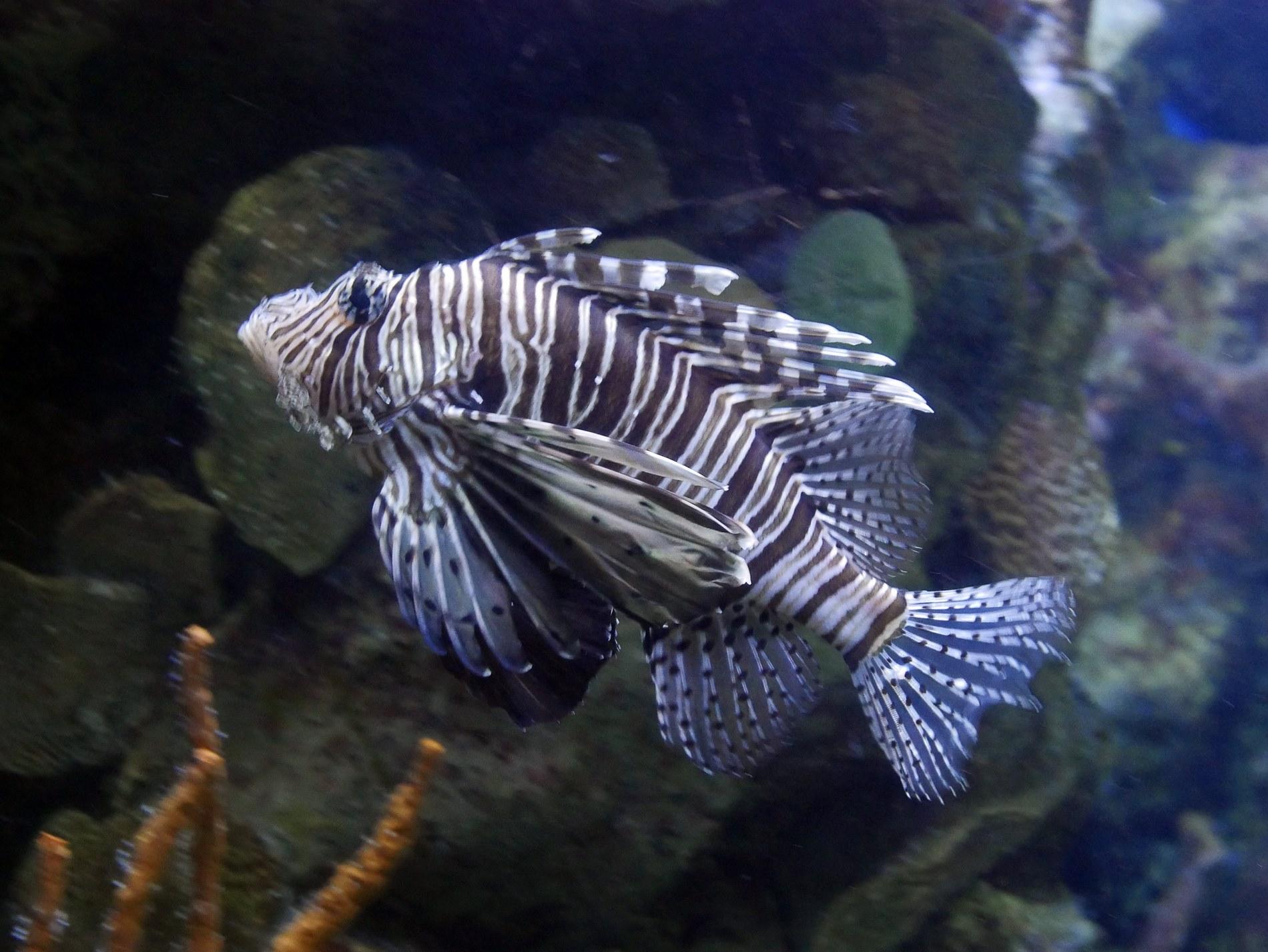 aquarium barcelone - juliesliberties