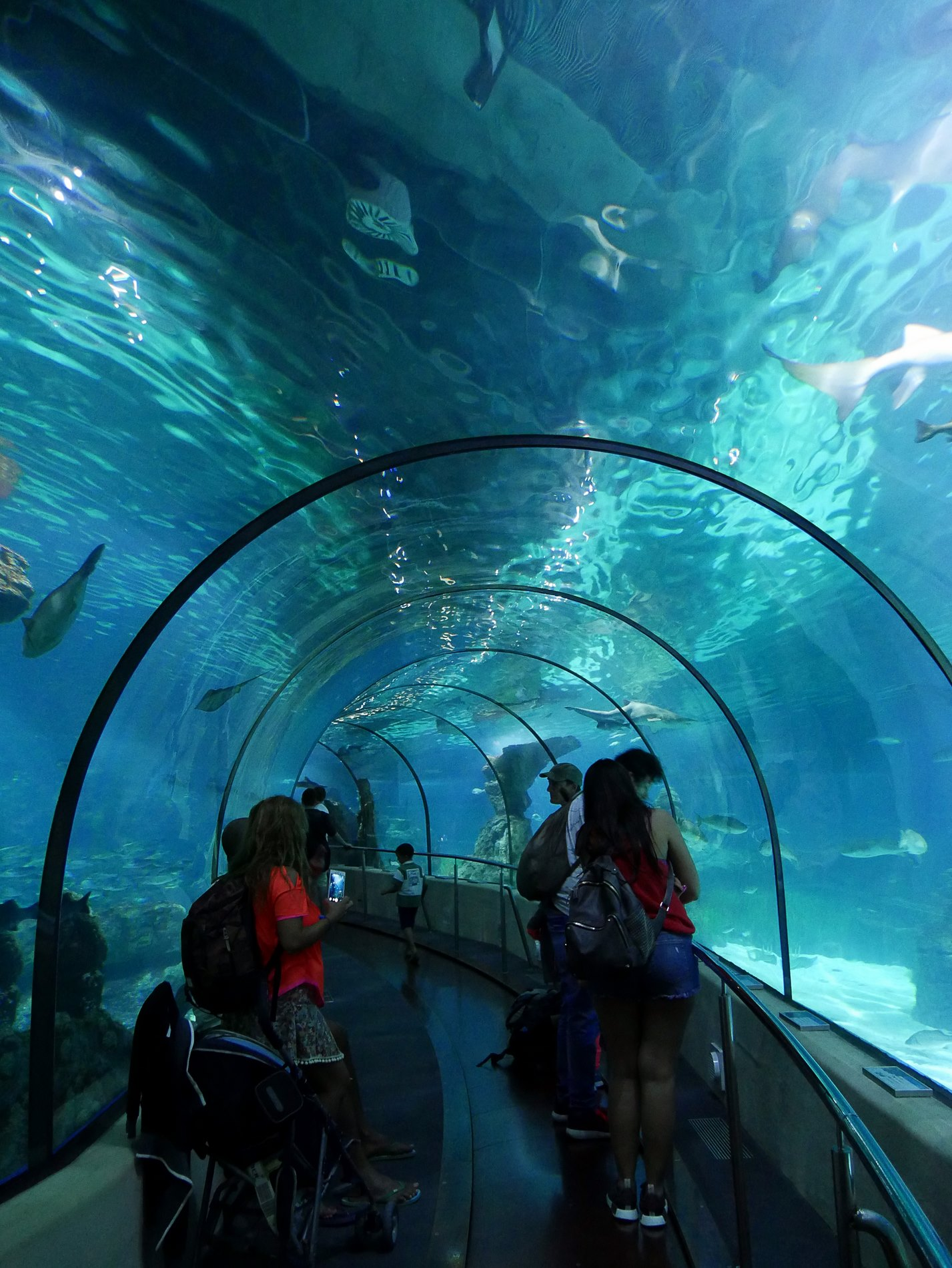 aquarium tunnel barcelone - juliesliberties
