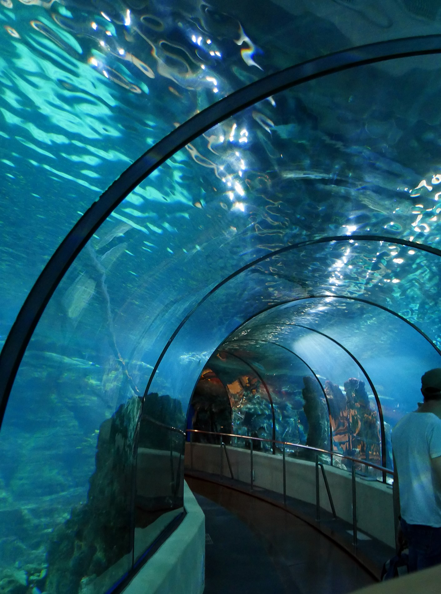 aquarium tunnel barcelone - juliesliberties
