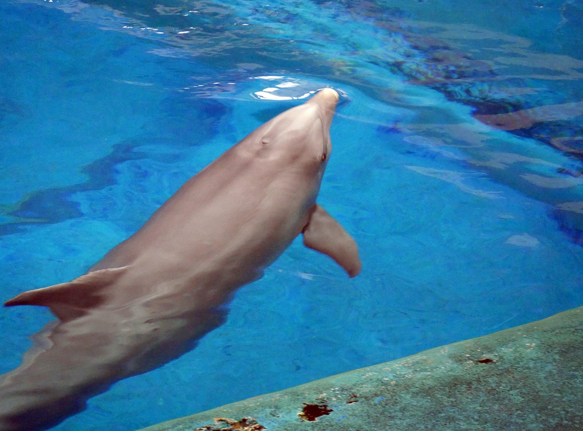 zoo barcelone dauphin - juliesliberties