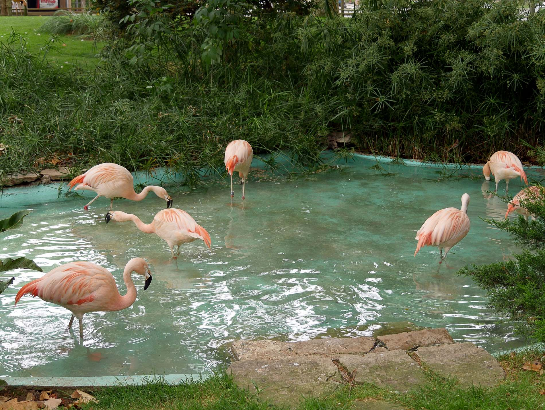 zoo barcelone oiseau - juliesliberties