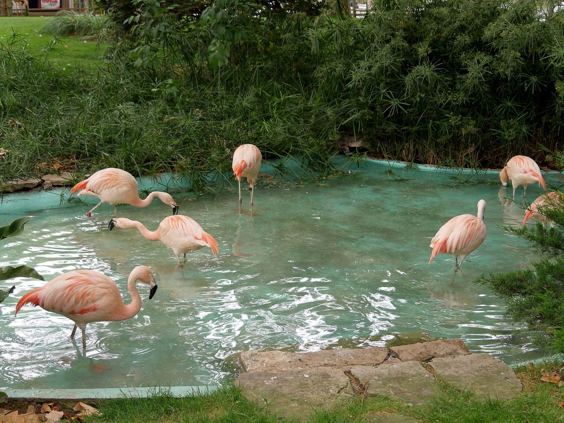 zoo barcelone oiseau - juliesliberties
