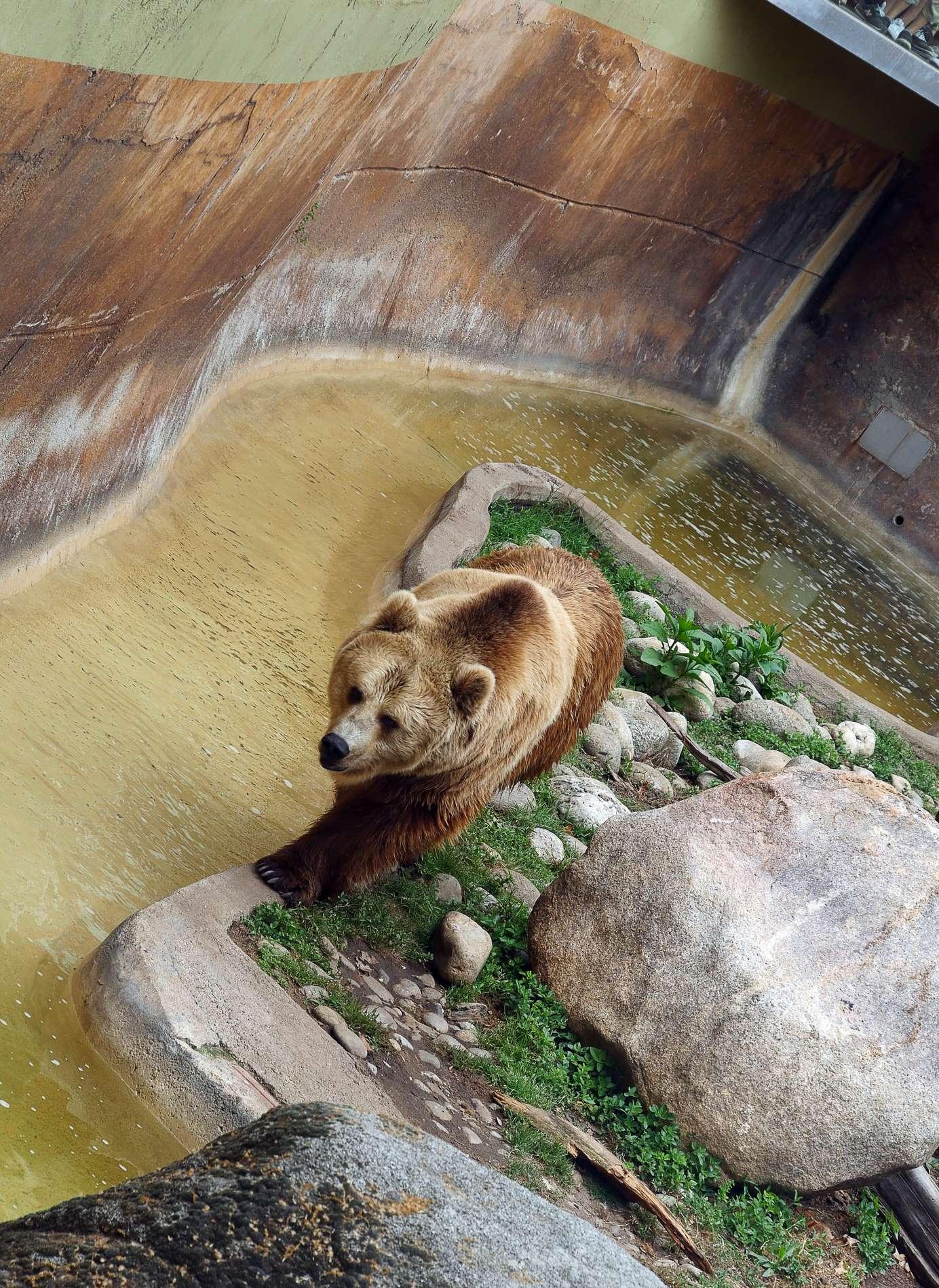 zoo barcelone ours - juliesliberties