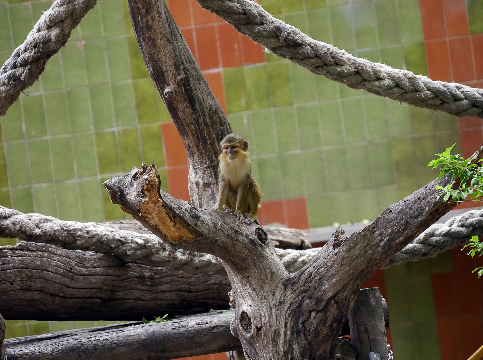 zoo barcelone primate - juliesliberties
