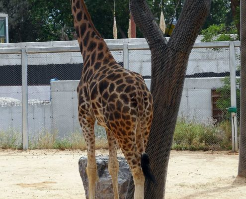 zoo barcelone savane - juliesliberties
