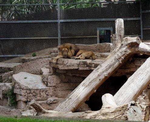 zoo barcelone savane - juliesliberties